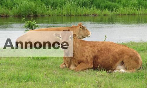 Økologisk kød på nettet